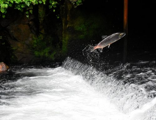 Review for the Governor's Salmon Recovery Office